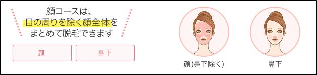 銀座カラー 顔セット 施術範囲